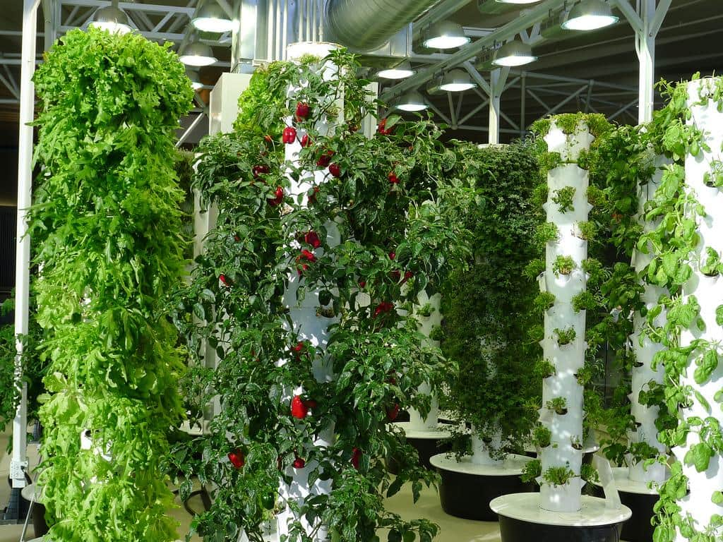 New Age Agriculture: Vertical and Urban Farming
