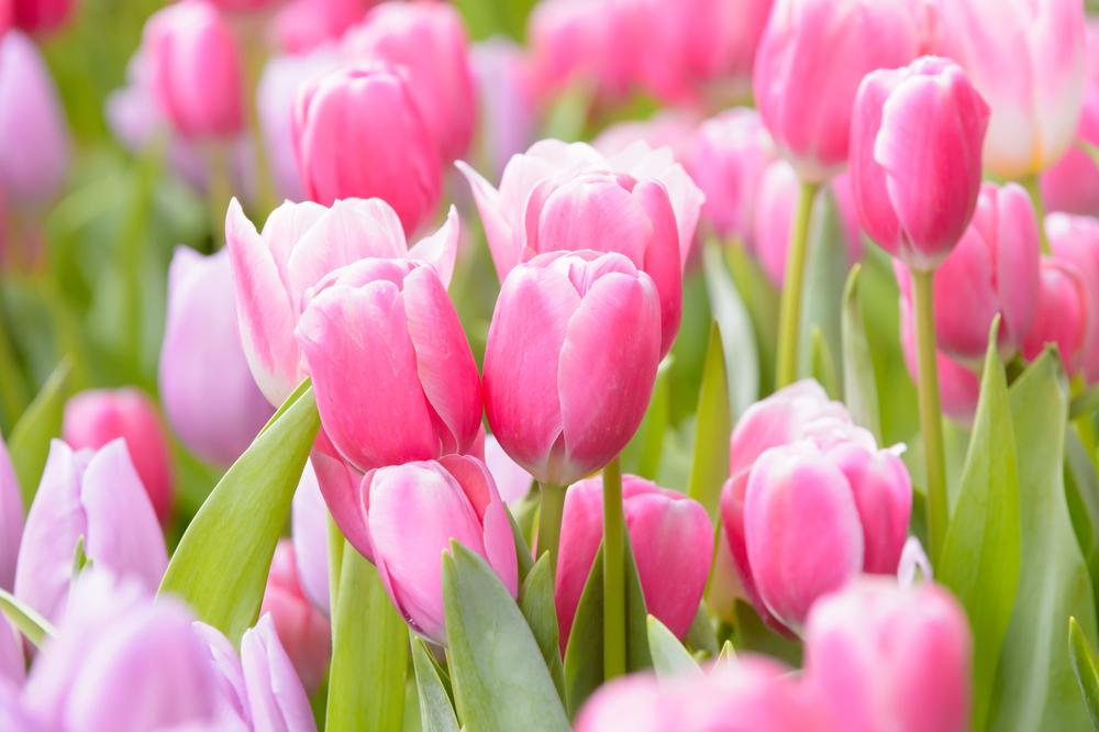 How To Care For Popular Garden Flowers - Gildshire