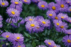 How To Care For Popular Garden Flowers