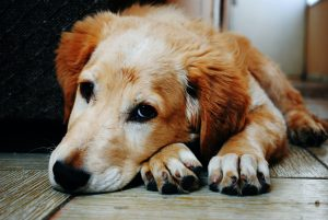 Our Loving Pets, Good Companions for the Elderly