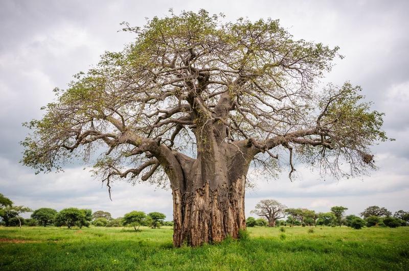 Africa S Garden Of Eden Tarangire And Lake Manyara