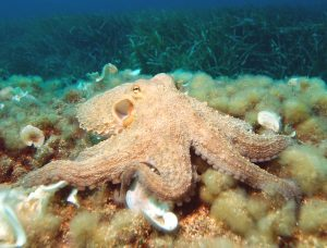 Why Octopuses Are Scary Smart