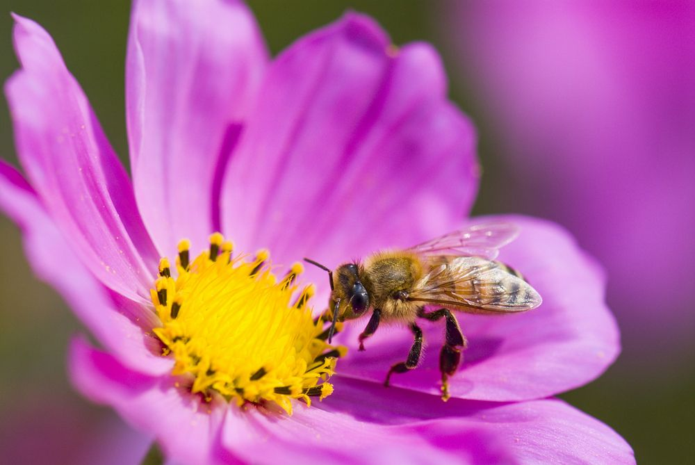 Bee-Aid: Planting a Garden to Help A Dying Species - Gildshire