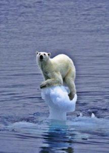 Polar bear in distress in the Arctic