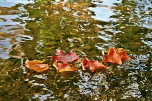 Backyard fountains and ponds are almost a magnet for leaves.
