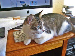 O. Henry likes to help me work.