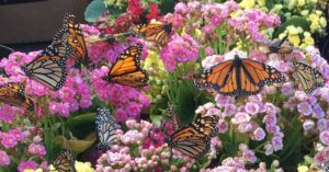 The butterflies asked me to thank you.