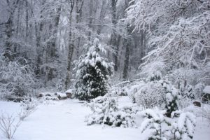 The freezing cold claimed hundreds of lives on Nazino