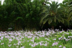 Botanical garden in Jacksonville.