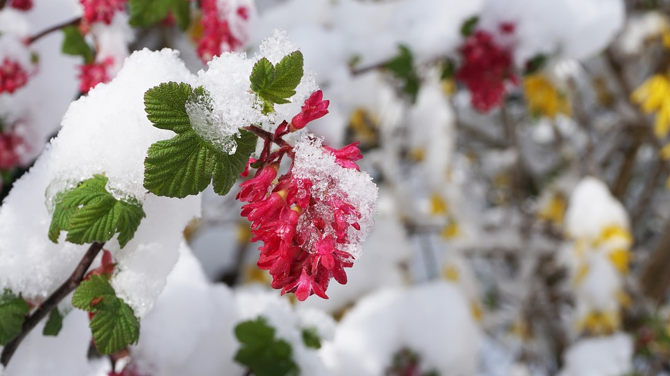 There are several different flowering plants out there that will add new life and a whole lot of beauty to your yard, even when it snows.
