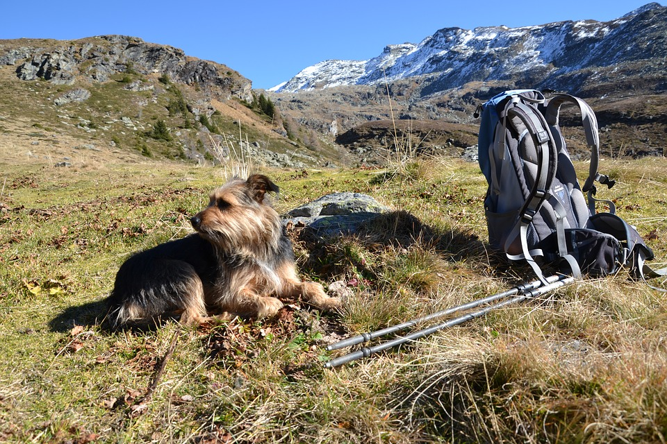 When you are packing your trail mix, pack food for your doggie too. Unflavored beef jerky makes for the perfect snack for your pup while on the trail.