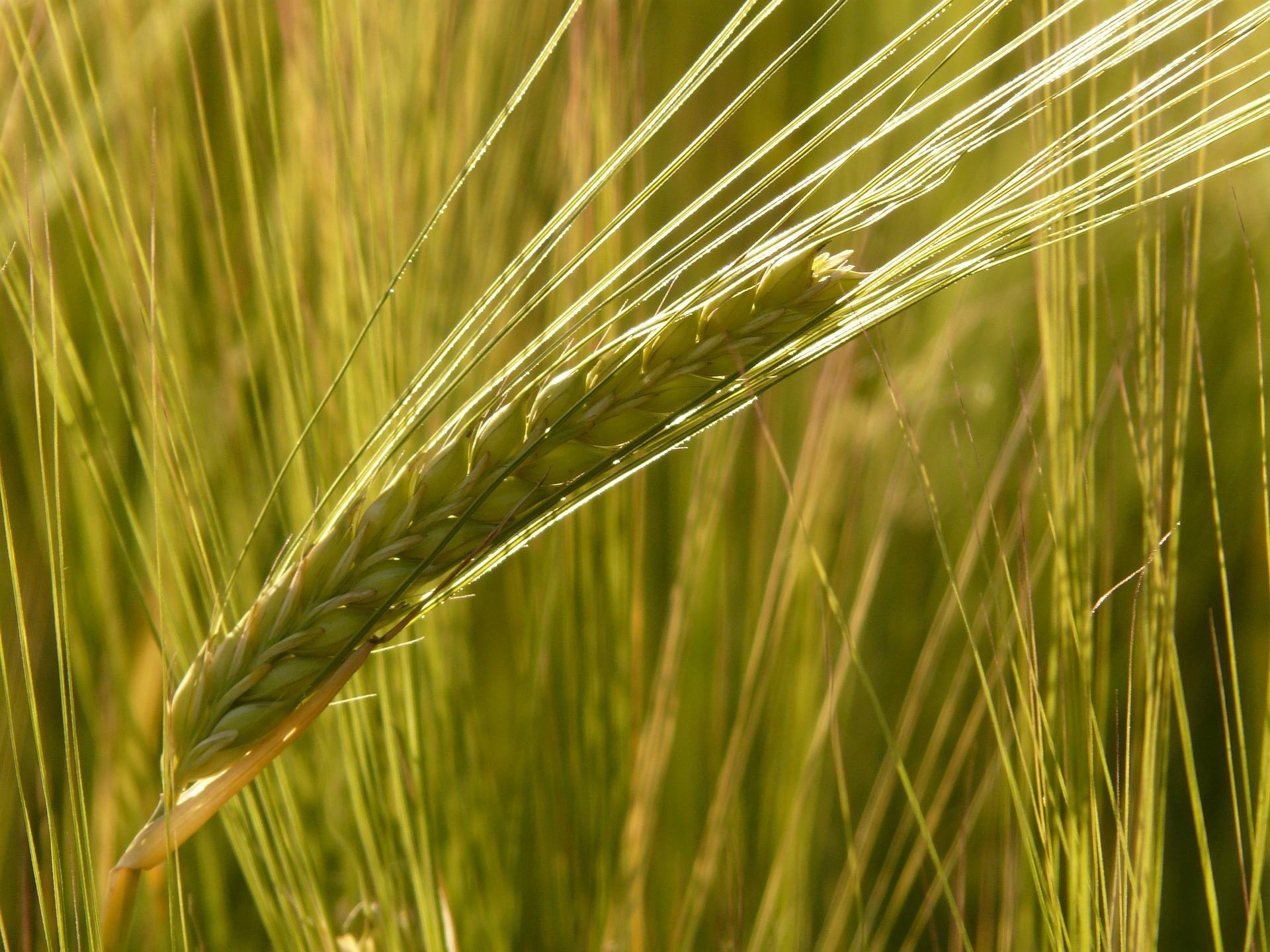 This past year, researchers from the U.S., China, and the U.K. set out to predict the future of barley production, specifically as it relates to beer.