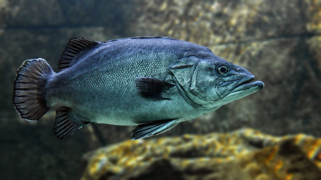 Fish affected by common antidepressants like Prozac and Zoloft found in the water.