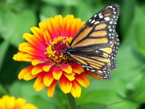 Planting a butterfly garden is a great plan for this year.