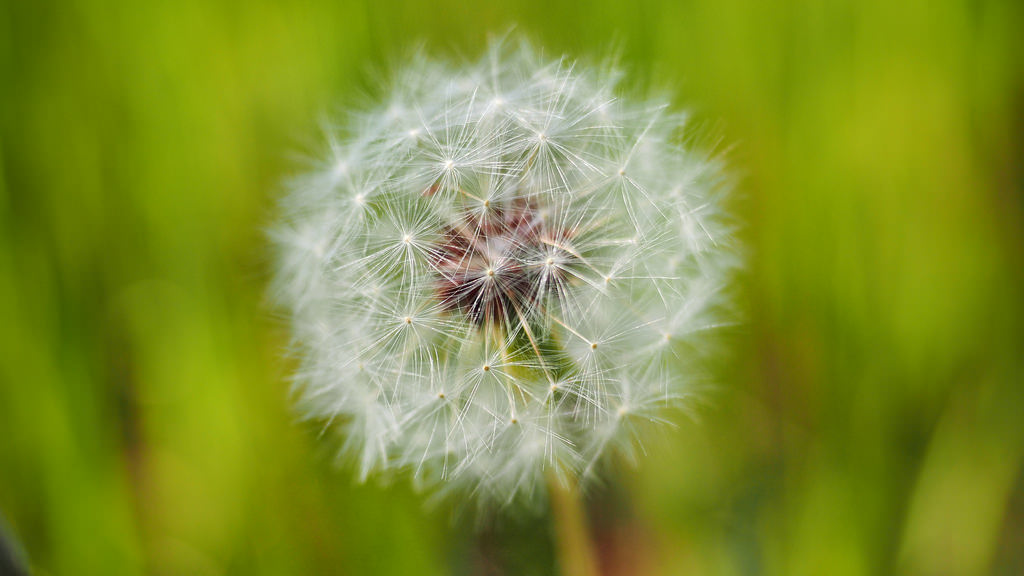 Pollen count statistics for your town are readily available on the internet. Watch the pollen count and stay inside when the number is high.