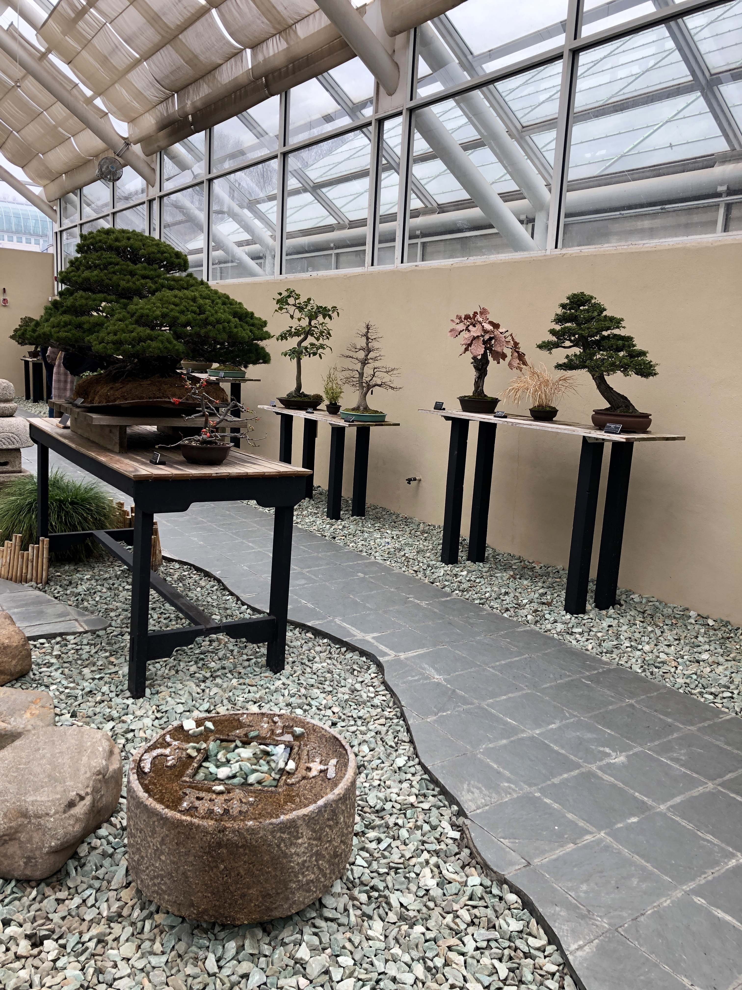 the Brooklyn Botanical Garden in New York has a whole area dedicated to growing bonsai trees and showing them off to the public.