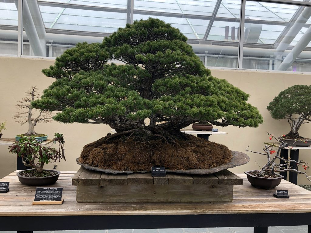 Bonsai Trees: The Living Sculptures - Gildshire