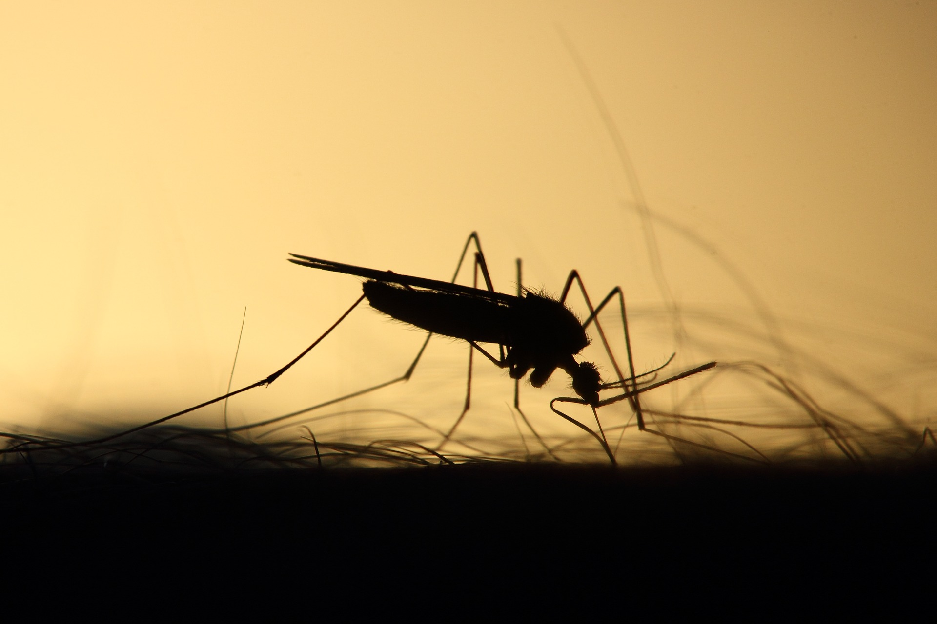 The number of deaths by mosquito are rising and as climate change signals longer breeding seasons for the insect, those numbers are going to increase.