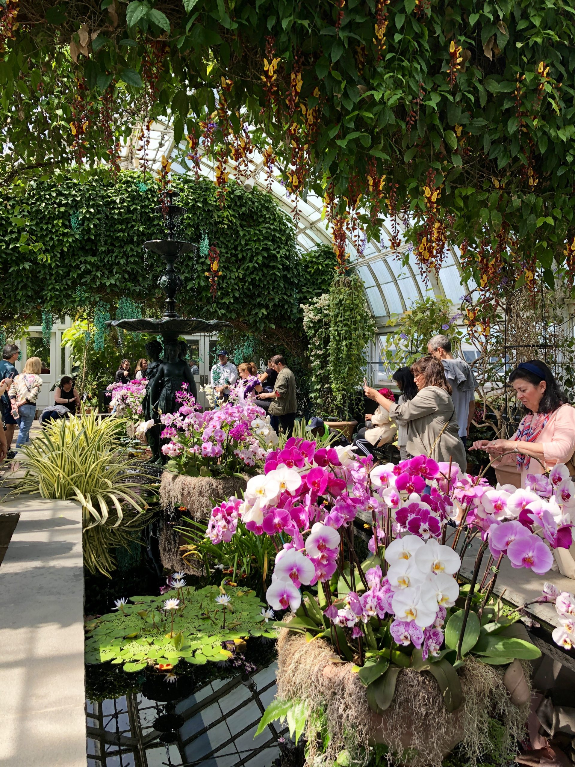 The Orchid Show Singapore At The New York Botanical Garden