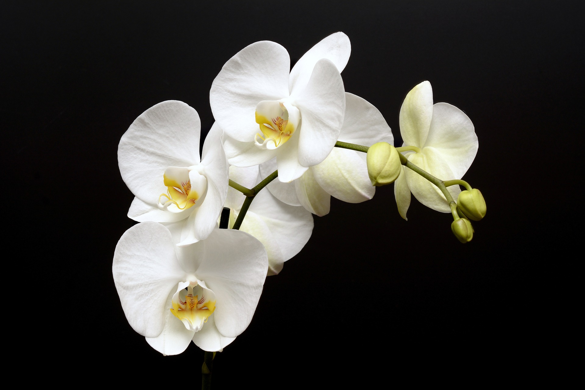 There are over 25,000 species of orchids around the world. They come in countless sizes, colors, and even fragrances.