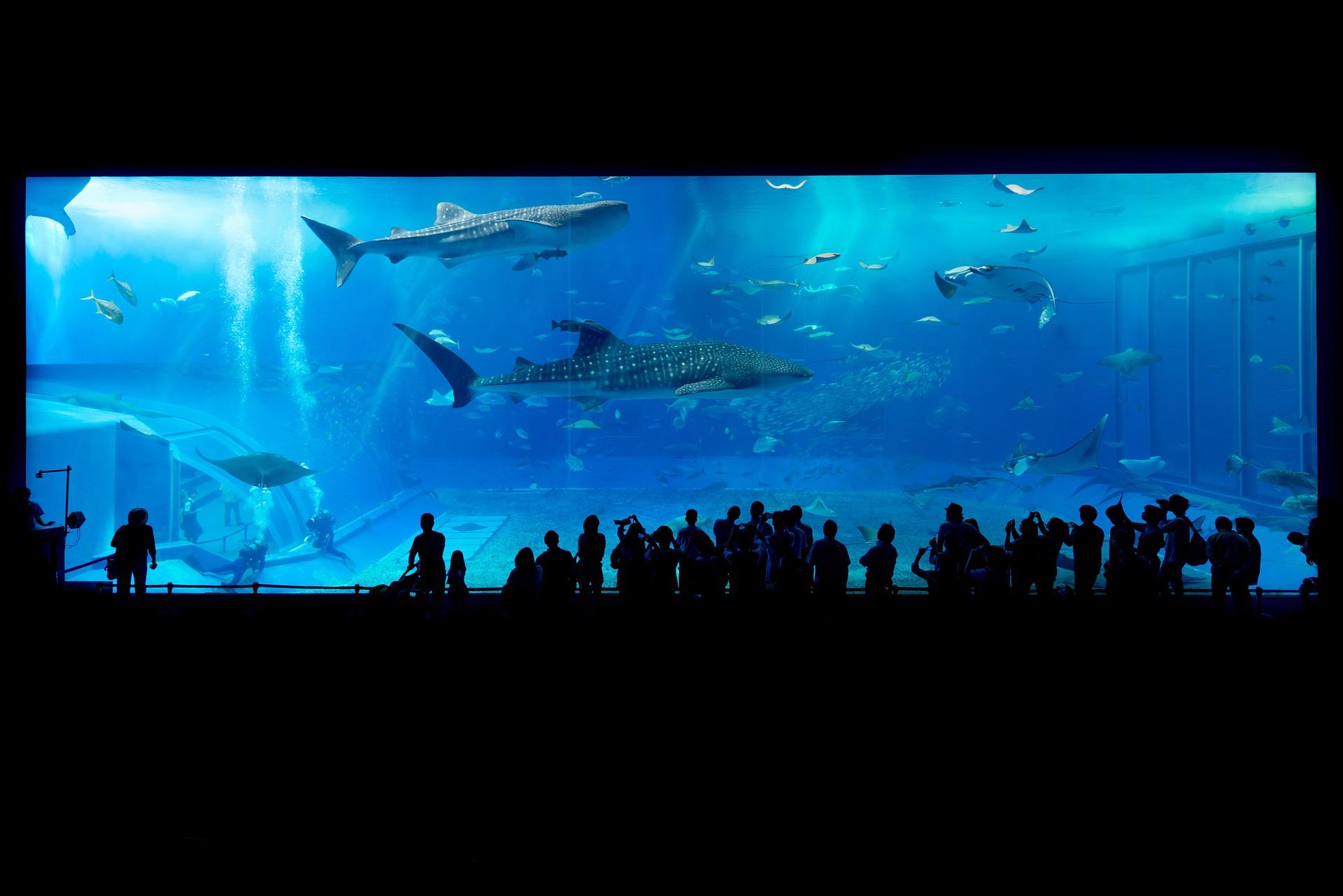Coolest Aquariums Around The World