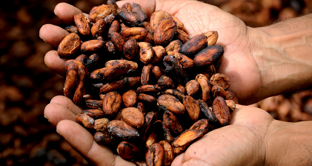 Theobromine was first discovered in the 1840's in cocoa beans.