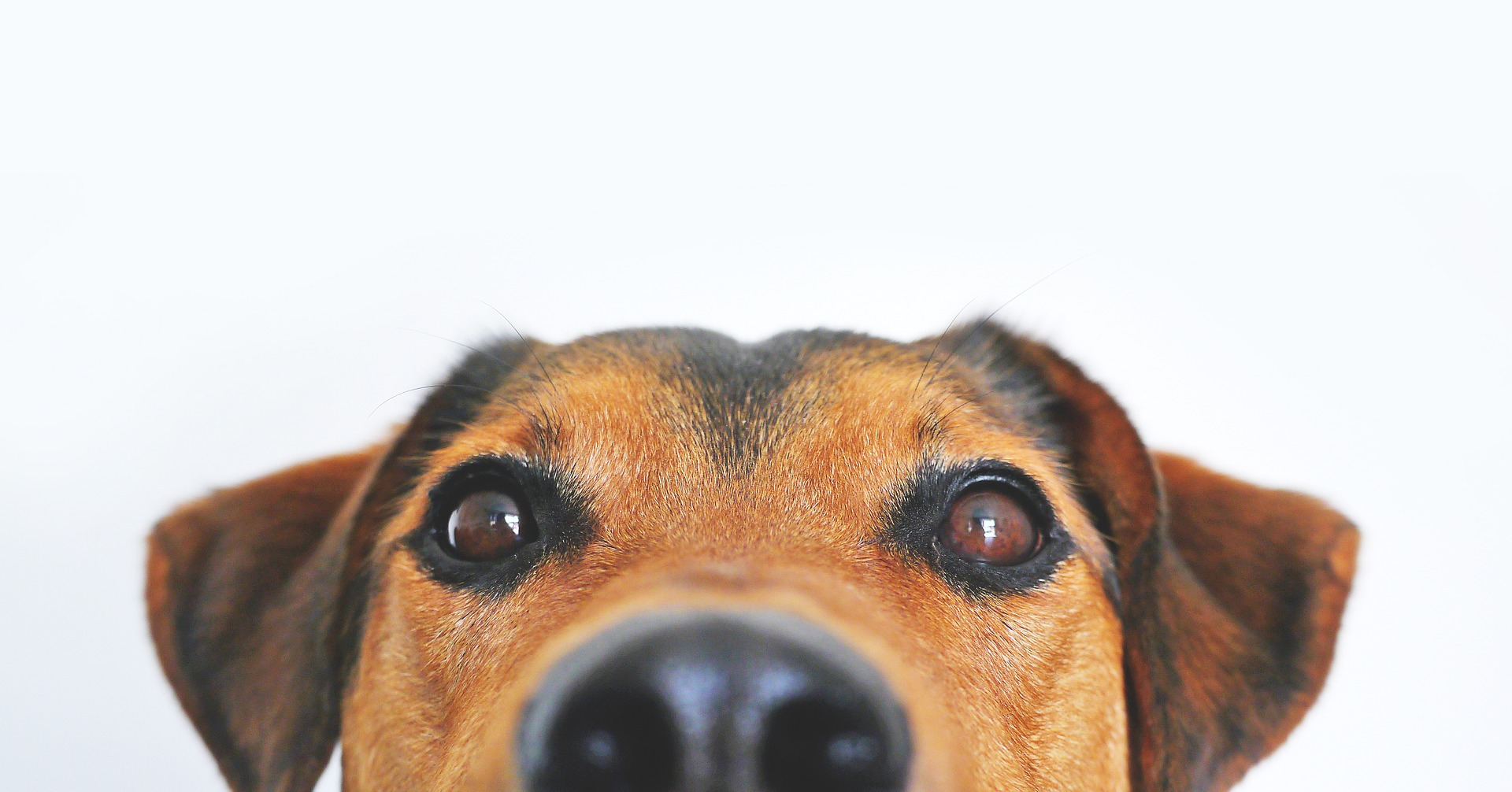 Can Your Dog Pick Up Your Stress?