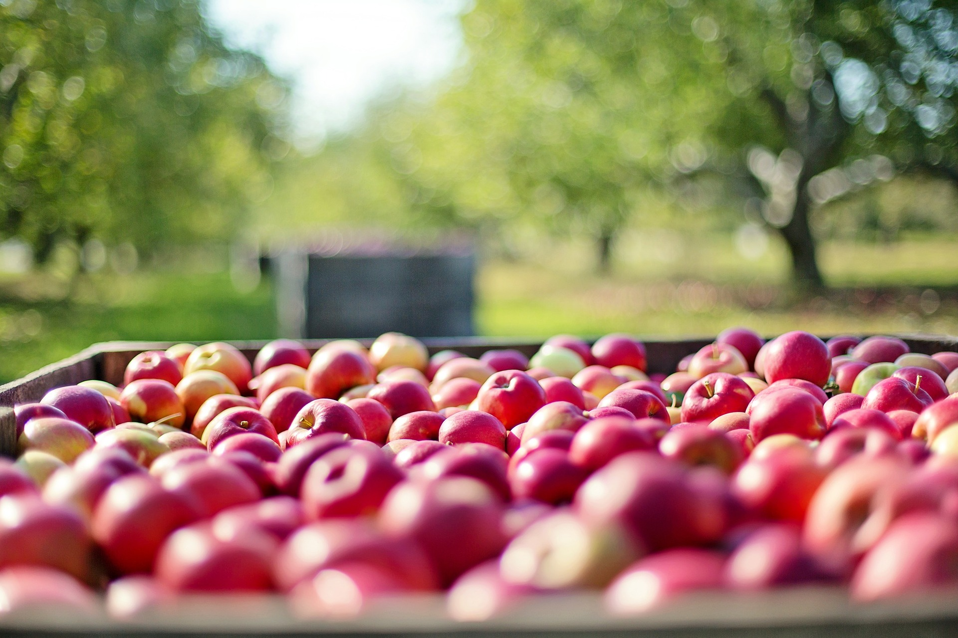 There are over 7,500 orchards today, with many offering pick-your-own.