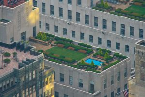 What are the Benefits of Rooftop Gardens